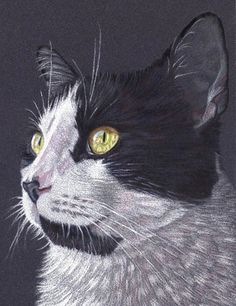 Janet Pantry's Colored Pencil Cat Portrait on Sanded Paper step-by-step tutorial on how she did it
