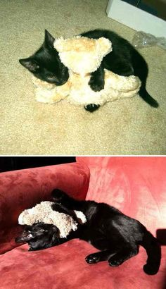 pets-growing-up-with-toys-7__700r