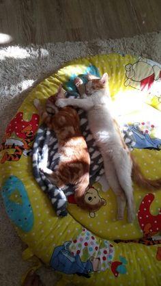 Best Buddies Kas en Gus