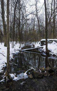 https://flic.kr/p/Dut26Q | The Black Stream | Cold Reflections