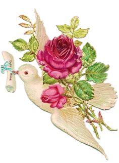 256px × 350px (scaled to 468px × 640px)    Glanzbilder - Victorian Die Cut - Victorian Scrap - Tube Victorienne - Glansbilleder - Plaatjes : Tauben mit Blumen - doves with flowers - colombes floral