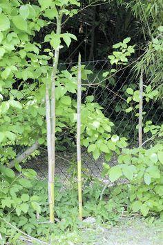 two lives Einklang / Werkstatt-Atelier: Die Vegetation im Garten wird nachher wieder Überr...