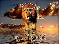 pictures of the lion of judah | the Lion of Judah ! - Revelation chapt. 5: 5.v.