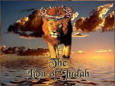 pictures of the lion of judah | the Lion of Judah ! - Revelation chapt. 5: 5.v.