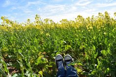 Feet in Canola in WA wheatbelt
