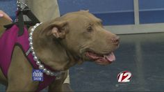 Dogs in need of safe, loving homes