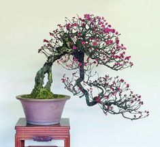 Bonsai Art, Bonsai Garden, Prunus, Big Tree, Ikebana, Landscape, Beautiful, Flowers, Motorcycles