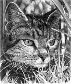 Cat, Animals, Animal Paintings, Paintings, Drawings, Pencil Drawings, Fine Art, Fine Art Blog, Fine art Blog In India, Fine Art Blogger, Painting Blogger in India, Paintings Blogger, Top Art Blogs in India, Fine Art Blog, Fine art Blog In India, Fine art Blogger in India, Painting Blogger in India, Fine Art Blog, Fine Art Blogger, Paintings Blogger, Painting Blogger in India, Fine art Blogger in India, Digital Art Blog in India, Digital Art Blog, Digital Inspiration, Photography Blog…
