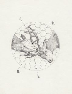 Tattoo Inspiration - Stag Fight. A Peter Carrington illustration. I'm not sure how readable this would be as a tattoo, but I love the concept nonetheless. #Art #Deer