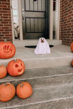 Halloween Inspo, Fall Halloween, Happy Halloween, Halloween Makeup, Halloween Costumes, Autumn Aesthetic, Aesthetic Photo, Autumn Cozy, Fall Wallpaper