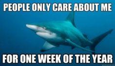 Shark problems.