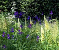 Vote for your favorite Chelsea Flower Show and win our Almanac Readers' Choice giveaway!