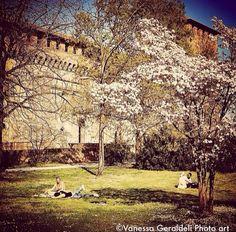Algumas das minhas fotos.  #vanessageraldeliphotoart  #fotografabrasileiraemparis #pavia #castelodepavia #jardins #amor #flores #italia #lombardia #primavera