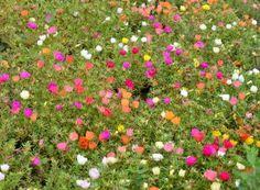 A venit primăvara! Cum tăiem trandafirii? | Paradis Verde Salvia, Paradis, Stepping Stones, Lawn, Outdoor Decor, Terrariums, Green, Plant, Stair Risers
