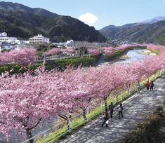 There are countless cherry blossom viewing spots near Tokyo great for day trips with gorgeous sakura and nature. Here are 7 destinations in 2020 where you can admire cherry blossoms from hot springs, at an ancient city, and with Mt. Cherry Blossom Japan, Cherry Blossom Season, Cherry Blossoms, Vacation Destinations, Vacation Trips, Day Trips, Japan Landscape, Tokyo Skytree, Visit Japan