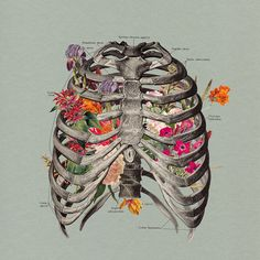 """""""When I think about you, flowers grow out of my grave."""" — Dead Man's Bones"""