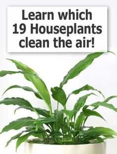 Why invest in expensive electrical air purifiers when you could purchase a few types of houseplants to clean and filter the air naturally and inexpensively?