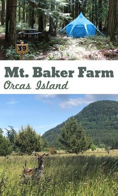Stay and Play: Mount Baker Farm on Orcas Island Orcas Island, Camping Hacks, Pacific Northwest, British Columbia, North West, Outdoor Gear, Summertime, Trips, Explore