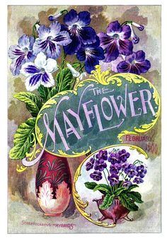 Mayflower 1900-02 http://www.pinterest.com/gpbnorman/vintage-garden-art/