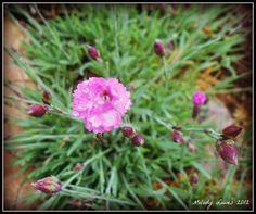 Wet Pinks