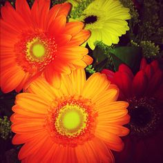 It is said that waking to see first thing fresh and brightly colored flowers is the best way to jolt your happy senses and guarantee a good day.  Fresh flowers are always a must in our house.