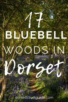 Some of the most amazing bluebell woods in Dorset to explore this spring. From ancient woodlands to Iron Age hillforts with incredible views to forests dotted with hidden art and architecture! Time to plan a few woodland walks to enjoy our stunning springtime wildflowers! #bluebells #spring #dorset Hidden Art, Iron Age, Days Out, Staycation, Wildflowers, Art And Architecture, Forests, Spring Time, Travel Ideas