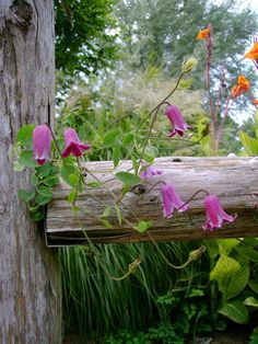 Wooden fence & flowers
