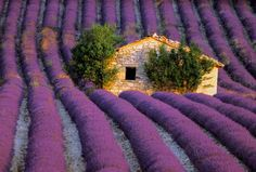 PROVENCE: CULTURAL & CULINARY EXPERIENCE-Snobby Tours, Inc.