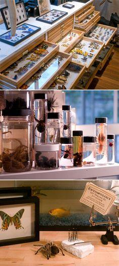 bugs! #curiosities #curiosity cabinet