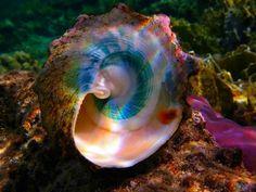 虹色のシェル 珊瑚礁 自然 高解像度で壁紙