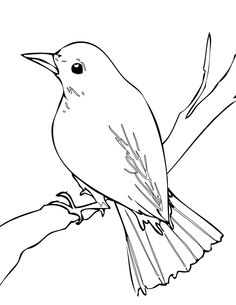 Nightingale coloring page - Animals Town - animals color sheet - Nightingale printable coloring Outline Drawings, Bird Drawings, Colorful Drawings, Animal Drawings, Easy Drawings, Nightingale Bird, Stylo 3d, Flower Mural, Animal Templates