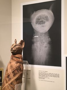 Carnegie Museum Of Natural History — X-ray of a Cat Mummy