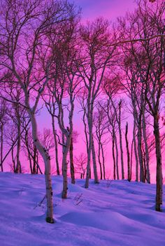 """""""Winter Sunset"""" Photo by Beautiful Nature found on """"Magical Nature Tour"""". Winter Szenen, Winter Sunset, Winter Trees, Winter White, Beautiful Sunset, Beautiful World, Landscape Photography, Nature Photography, All Nature"""