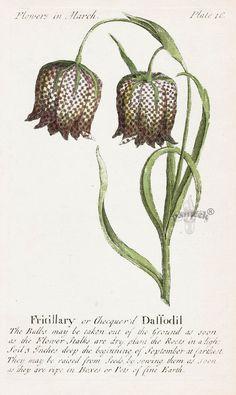 J. Duke Compleat Florist Botanicals 1747