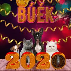 Share Pictures, Animated Gifs, Sendai, Happy New Year 2020, Happy Birthday, Happy Brithday, Urari La Multi Ani, Happy Birthday Funny, Happy Birth