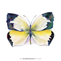 55 Mexican Yellow Butterfly Original or by AmyKirkpatrickArt