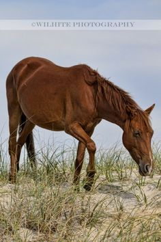 Wild horse by Wilhite Photography Wilhite Photography © 2012