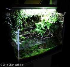 Be a Better Artist of Aquascaping!!