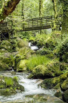 Información de la Fervenza y el Monasterio de Toxo Soutos Forest Landscape, Waterfall, Beautiful Places, Castle, Tours, Sky, River, World, Nature