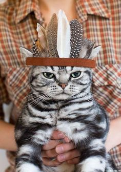 Celebrate Thanksgiving early with this cat Halloween costume.