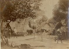 Kokoscultuur in district Coronie, Suriname (1897-1927).....fotograaf Eugen Klein