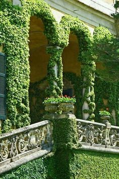 Co Co's Collection : structured formal gardens emphasis on symmetry # formal #gardens  # fountain # fig ivy