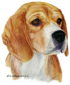 Cimmaron Dog Art creates art work, t shirts, and decals for all breeds of dogs including corgis,irish setters and vizslas. Beagle, Corgi, All Breeds Of Dogs, Brittany Spaniel, Irish Setter, Dogs Golden Retriever, Dog Art, Hand Drawn, How To Draw Hands