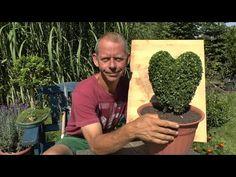 Buchsbaum, Buxus schneiden - Herz gestalten - YouTube