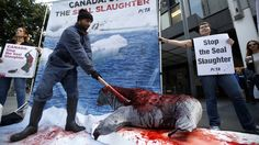 Sea Shepherd slams Greenpeace for seal harvest support  http://pronewsonline.com/pronews-blog  Members of animal rights group PETA protest Canada's support for seal harvesting. © Lucy Nicholson
