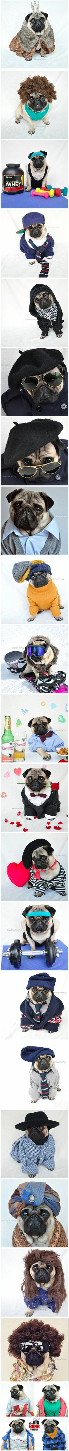 Nutello the Dog is the most fashionable pug on the internet, and these images prove it.