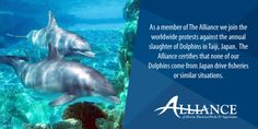 AMMPA fights back against activist accusations of participation in the Taiji fish drives and highlight that ending the barbaric hunts is the real issue.