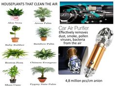 Mass Cane, Bamboo Palm, Car Perfume, Boston Ferns, Air Purifier, Houseplants, Aloe Vera, Detail, Winter