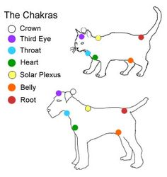 Animal chakras.