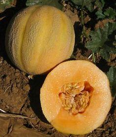 Melon Minnesota Midget   Garden Seeds and Plants